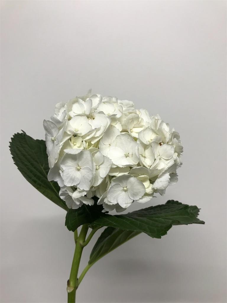 f:id:asunaro-flower:20190205184227j:image