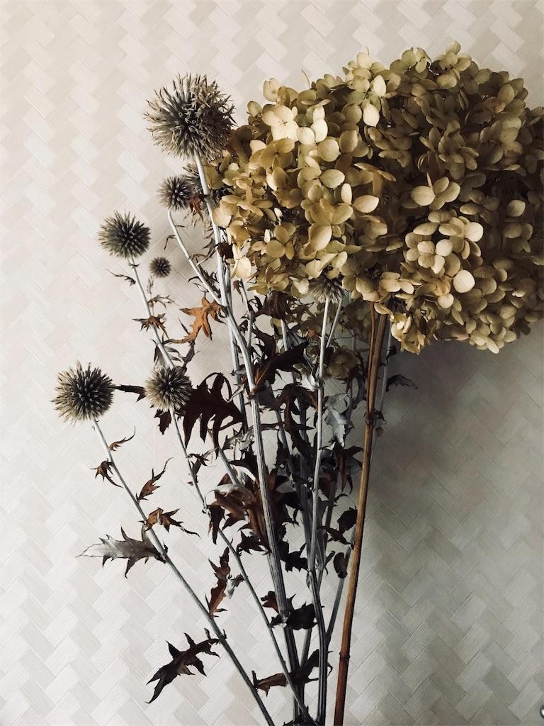 f:id:asunaro-flower:20190205190630j:image