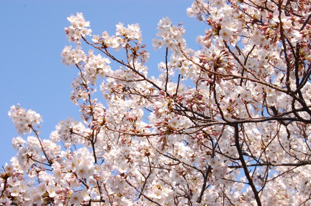 f:id:asunaro-flower:20190213033545j:plain