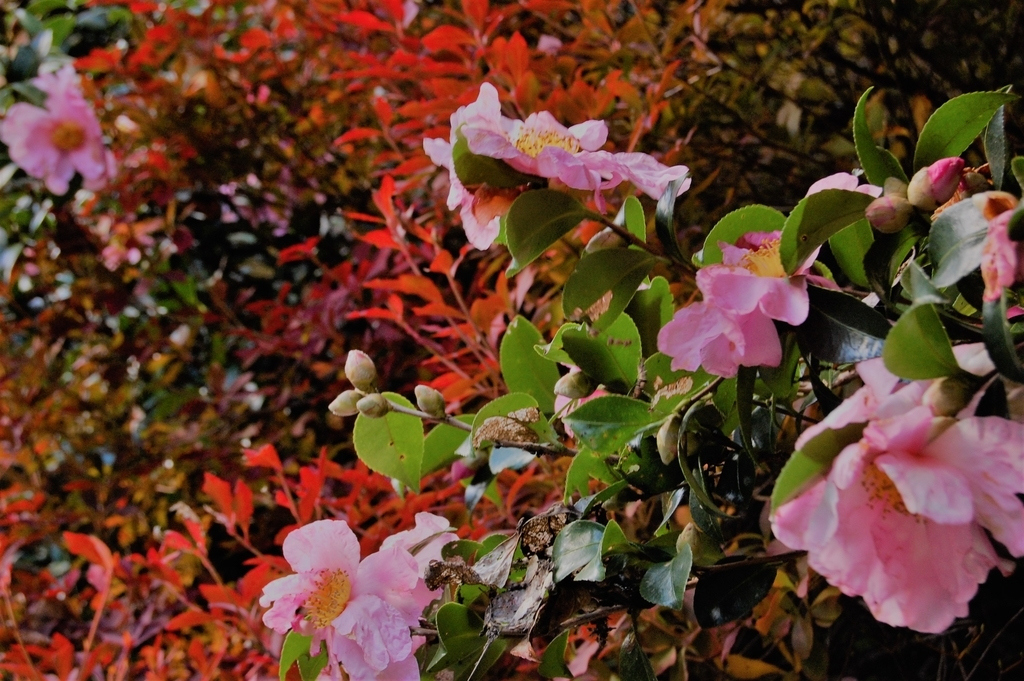 f:id:asunaro-flower:20190213033638j:plain