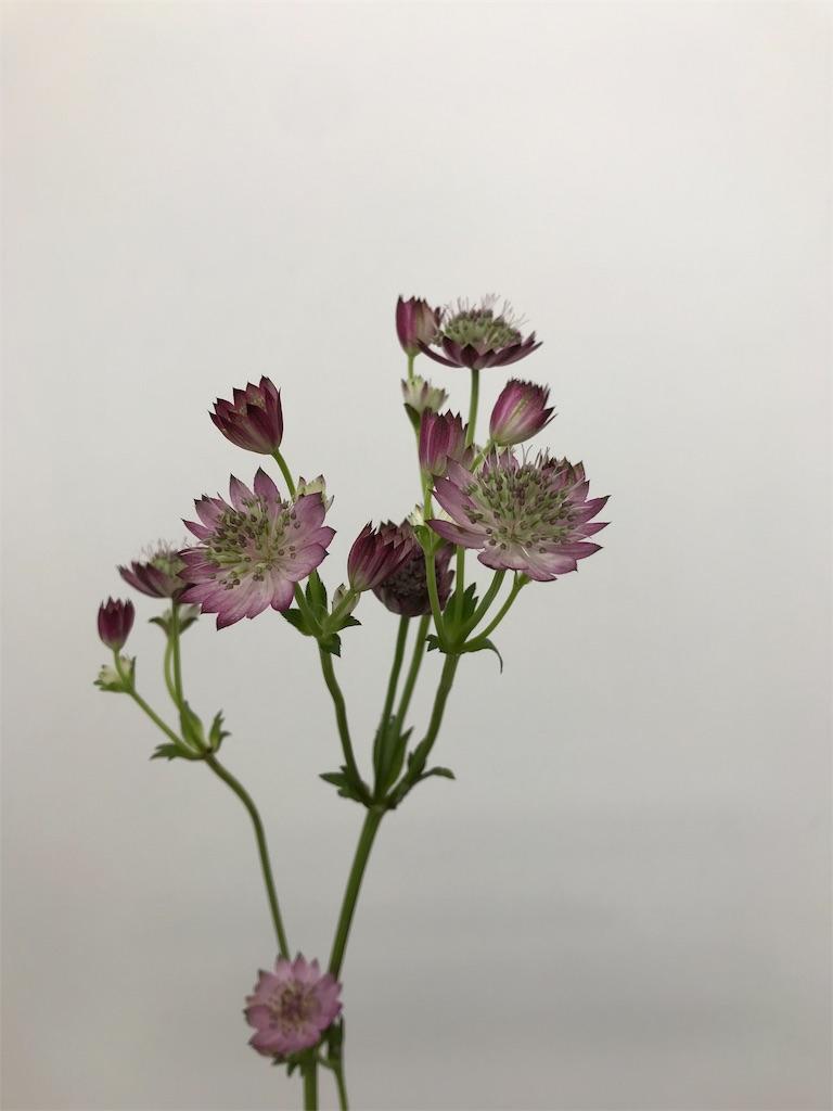 f:id:asunaro-flower:20190214121200j:image