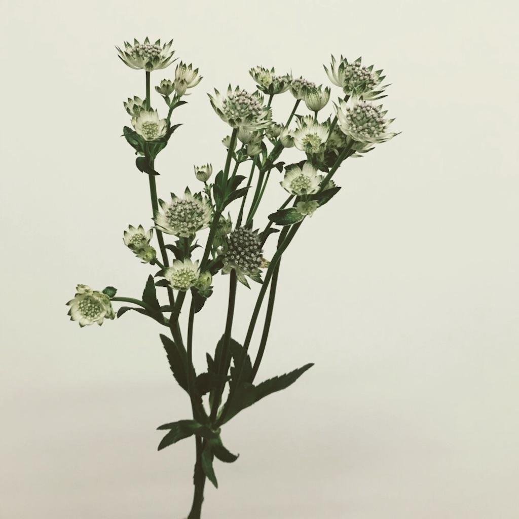 f:id:asunaro-flower:20190214132822j:image
