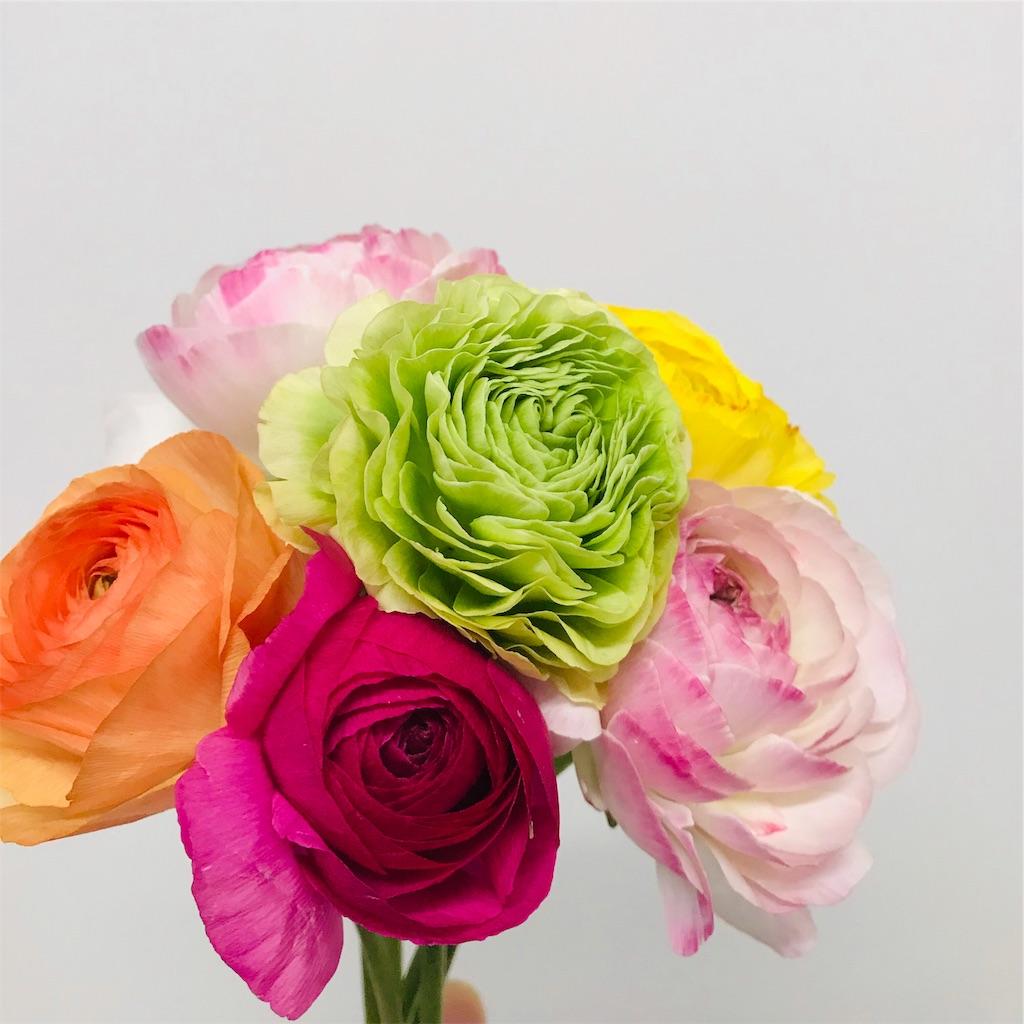 f:id:asunaro-flower:20190225125732j:image