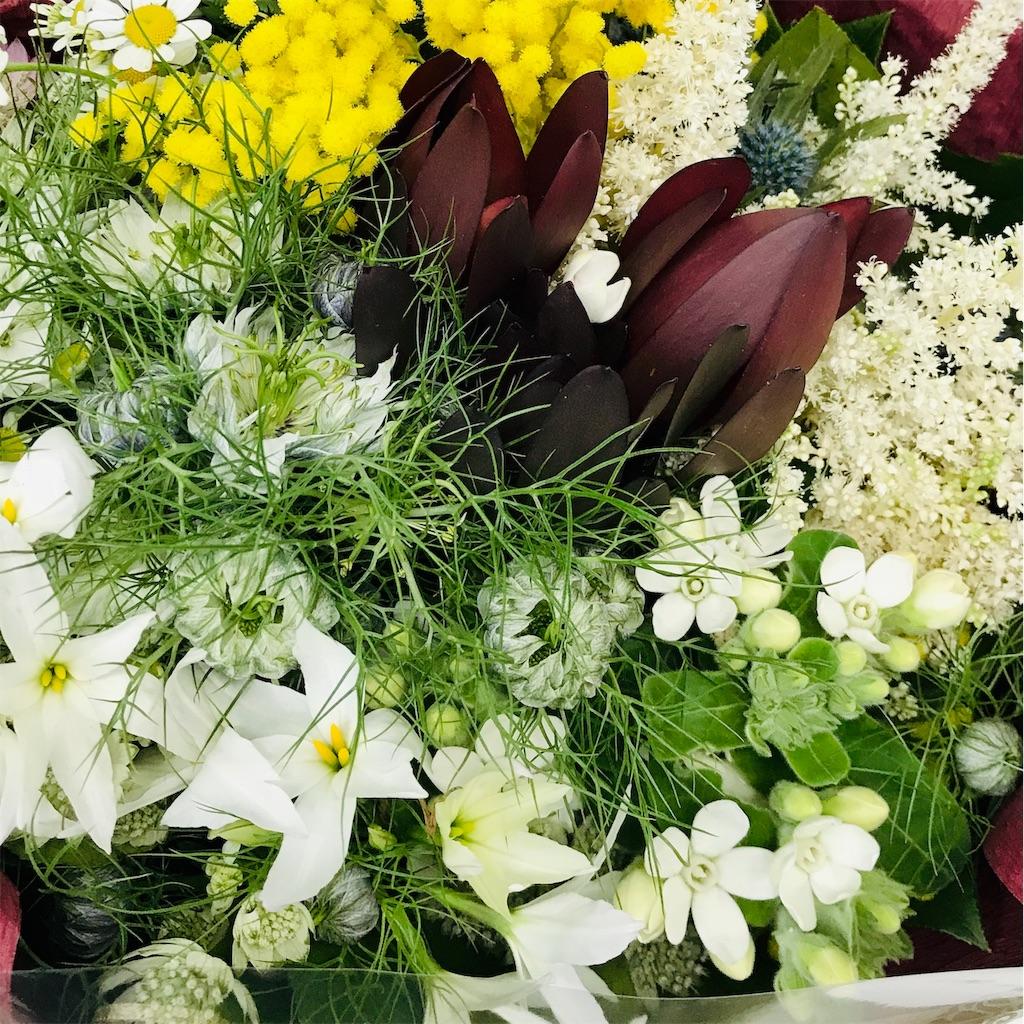 f:id:asunaro-flower:20190324173221j:image