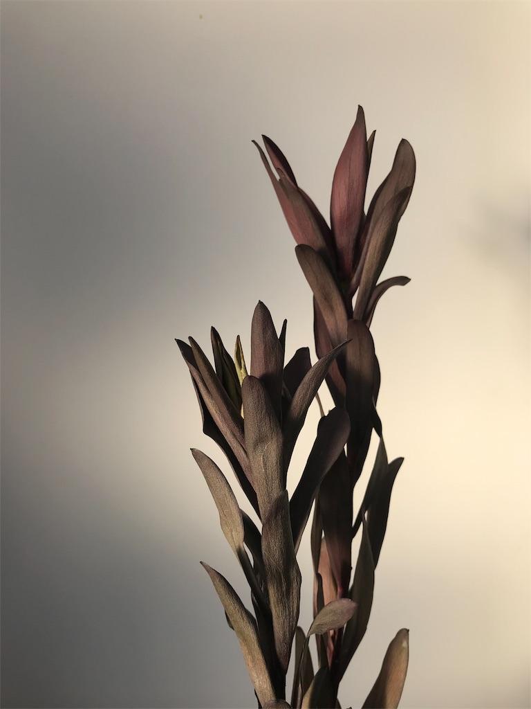 f:id:asunaro-flower:20190324181232j:image