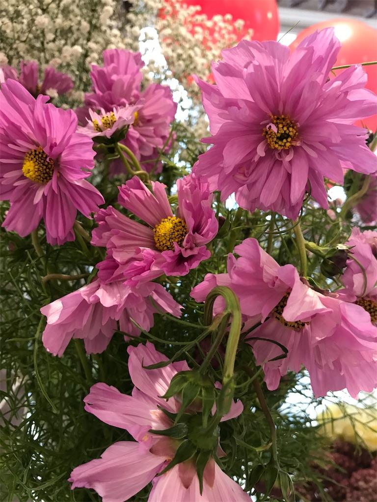 f:id:asunaro-flower:20190328003203j:image