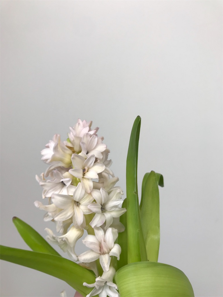f:id:asunaro-flower:20190402140856j:image