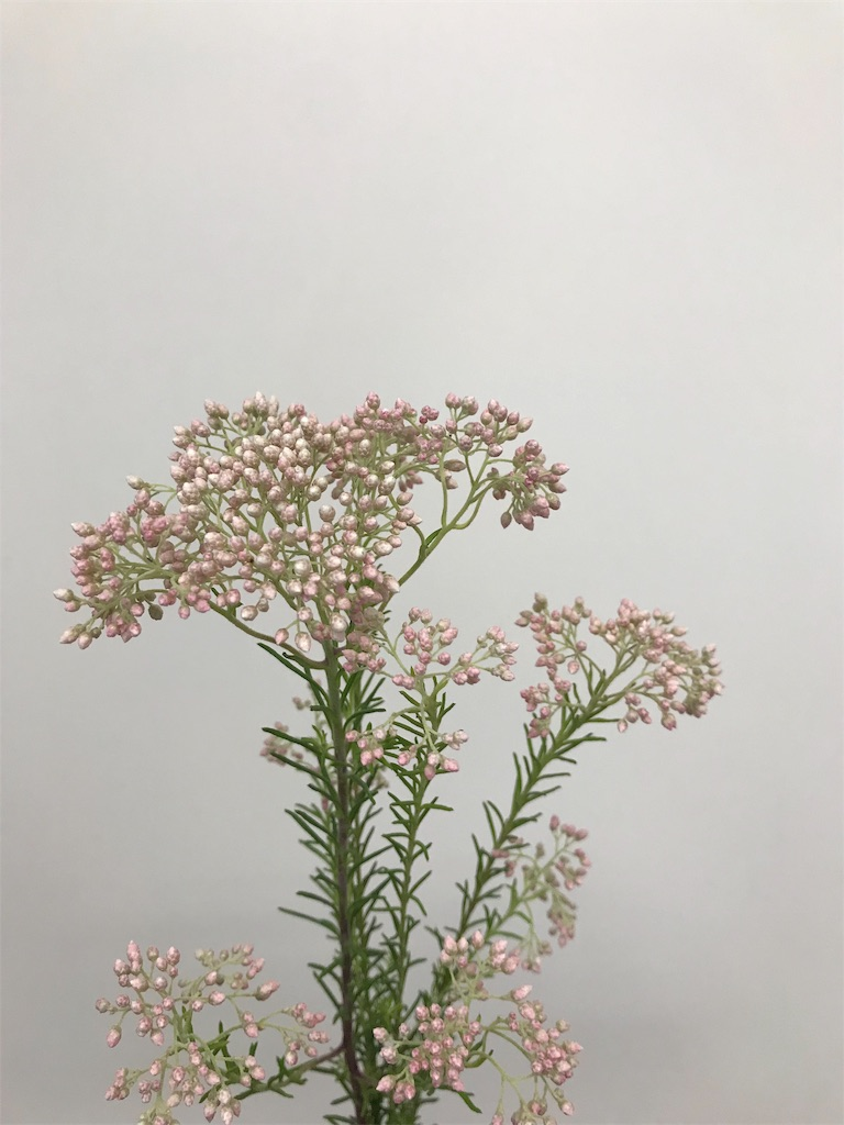 f:id:asunaro-flower:20190420105513j:image
