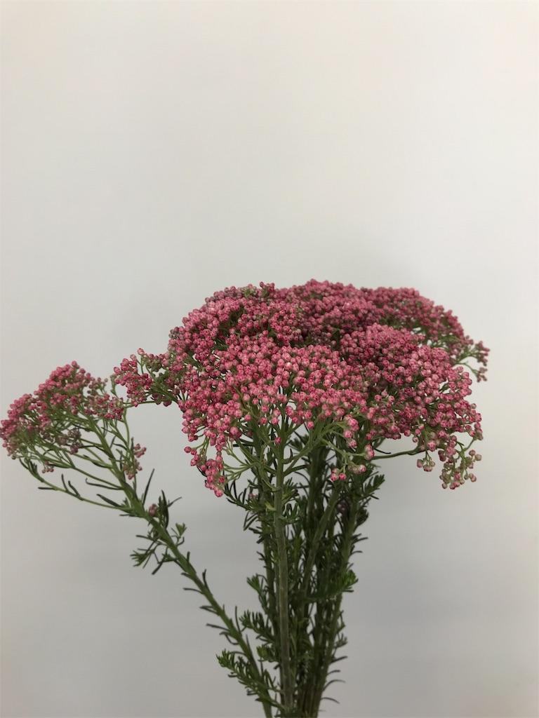 f:id:asunaro-flower:20190420111323j:image