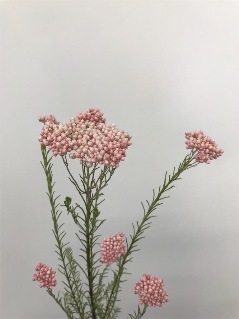f:id:asunaro-flower:20190420111937j:image