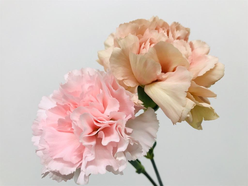 f:id:asunaro-flower:20190501155400j:image