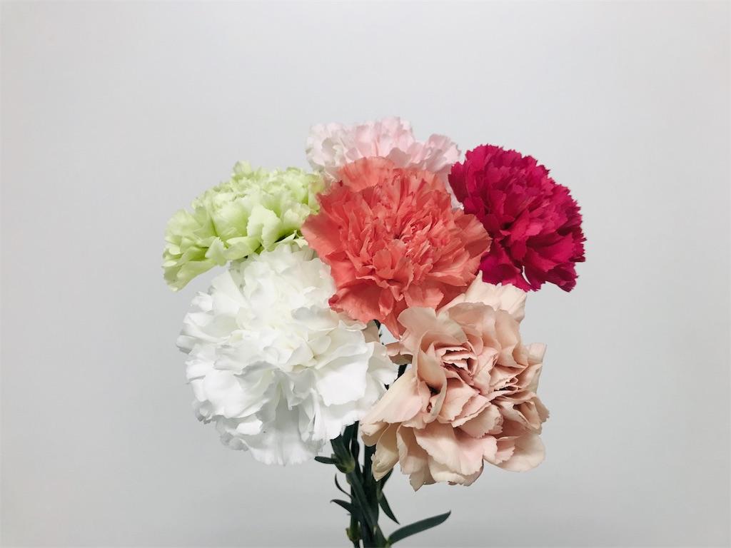 f:id:asunaro-flower:20190501180034j:image