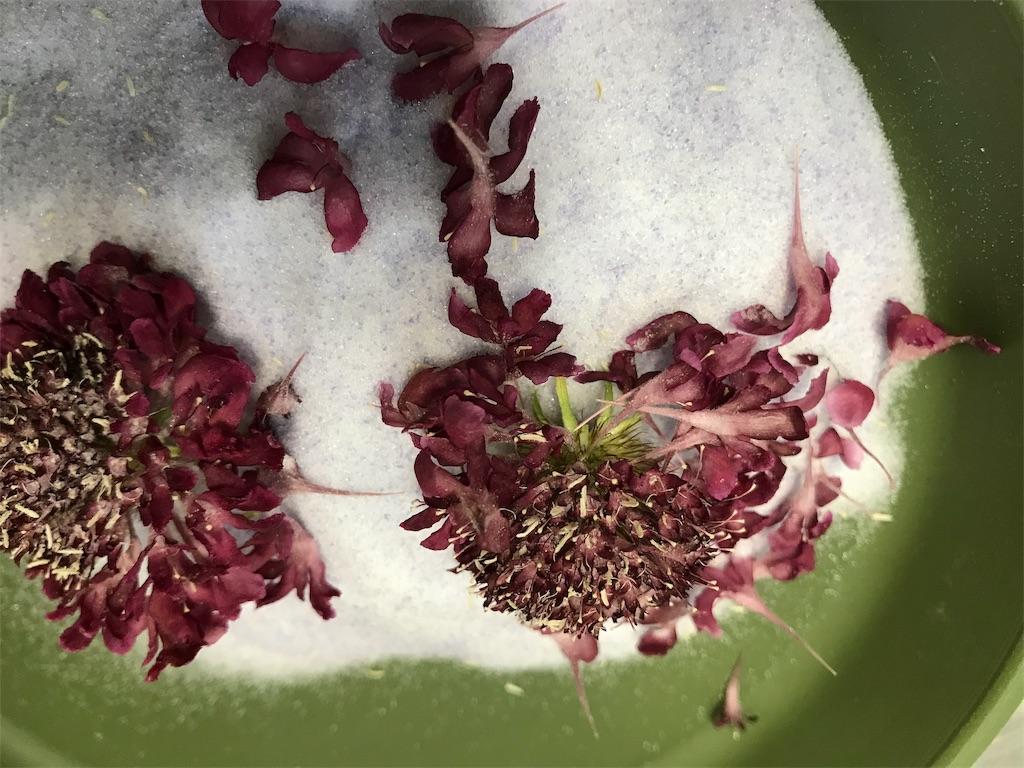 f:id:asunaro-flower:20190505231950j:image