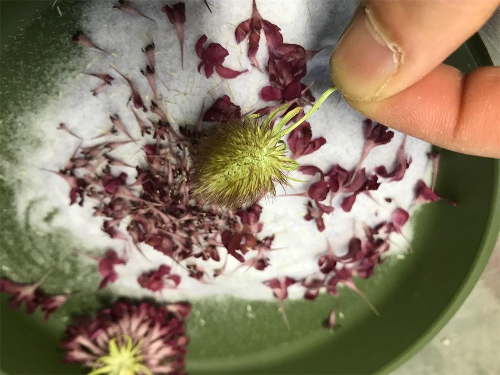 f:id:asunaro-flower:20190505232104j:image