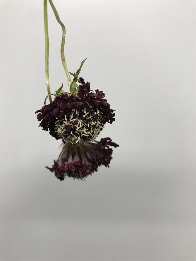 f:id:asunaro-flower:20190505232404j:image