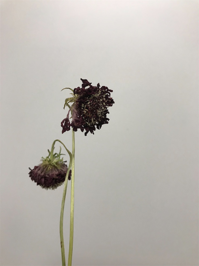 f:id:asunaro-flower:20190505232552j:image