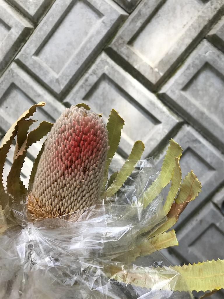 f:id:asunaro-flower:20190511182352j:image