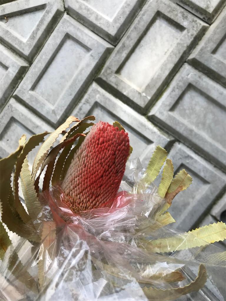 f:id:asunaro-flower:20190511182543j:image