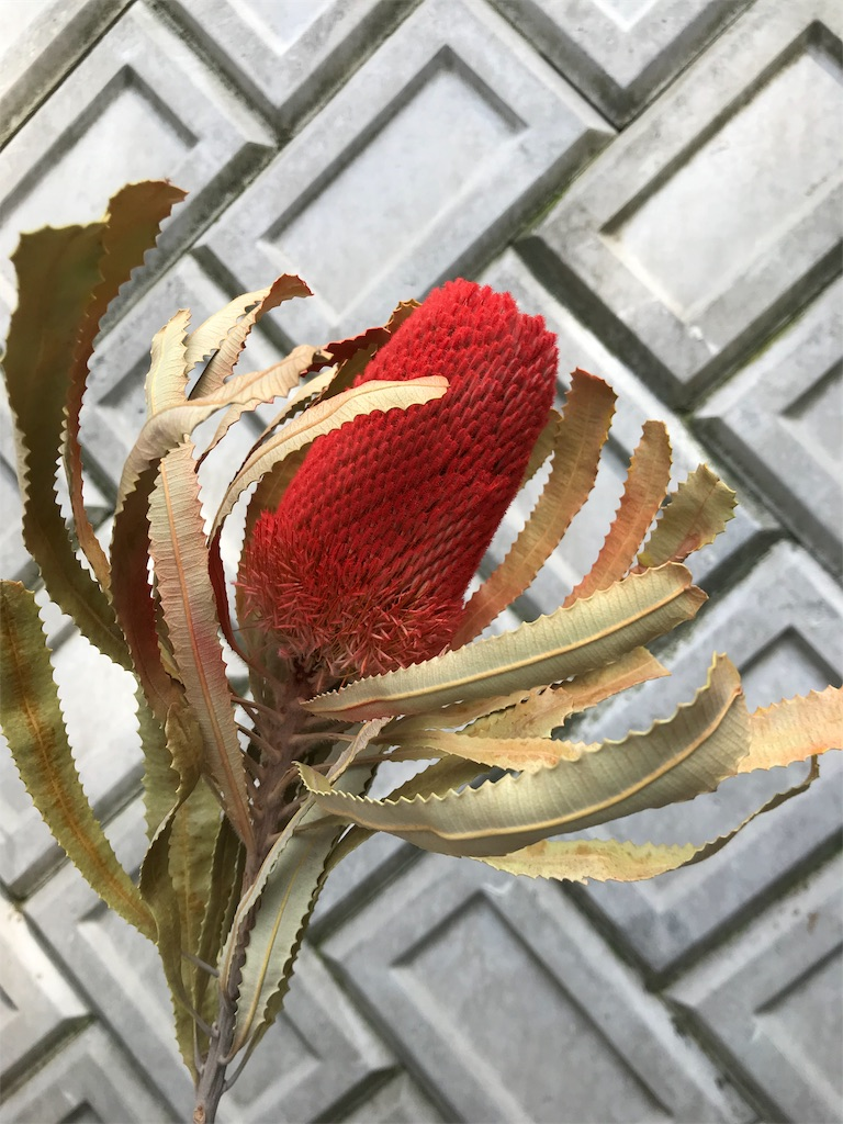f:id:asunaro-flower:20190511182608j:image