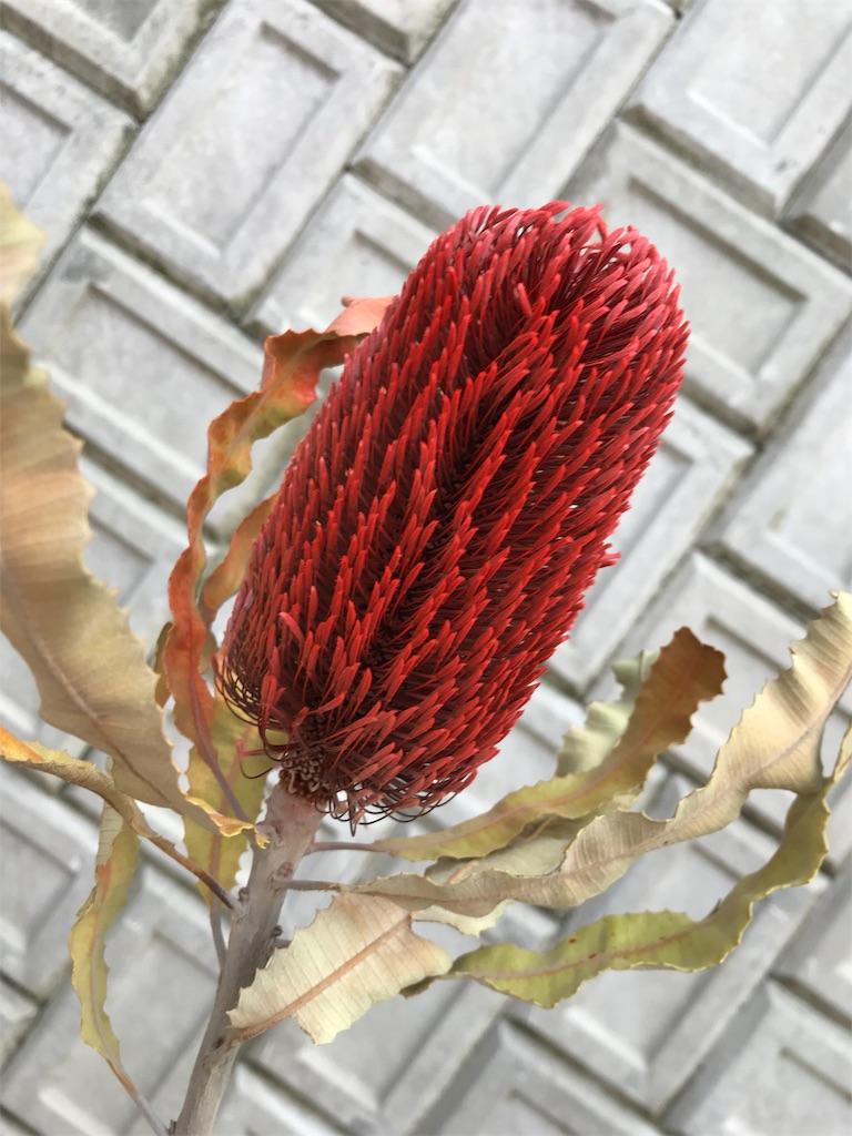 f:id:asunaro-flower:20190511184310j:image