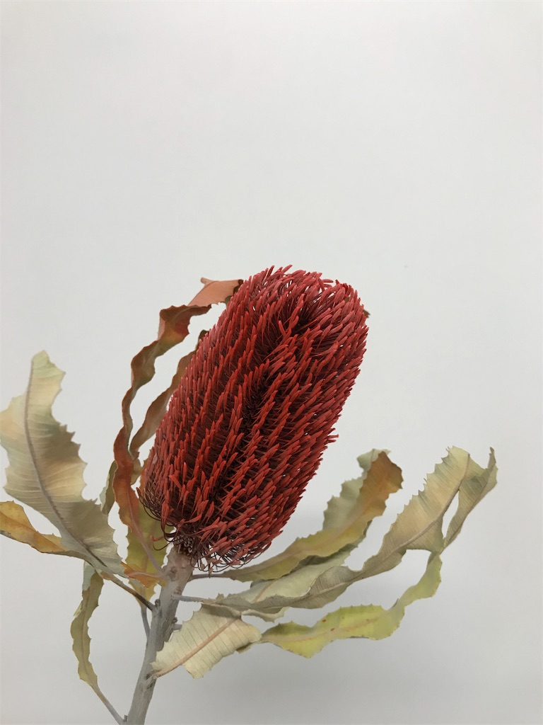 f:id:asunaro-flower:20190511184946j:image