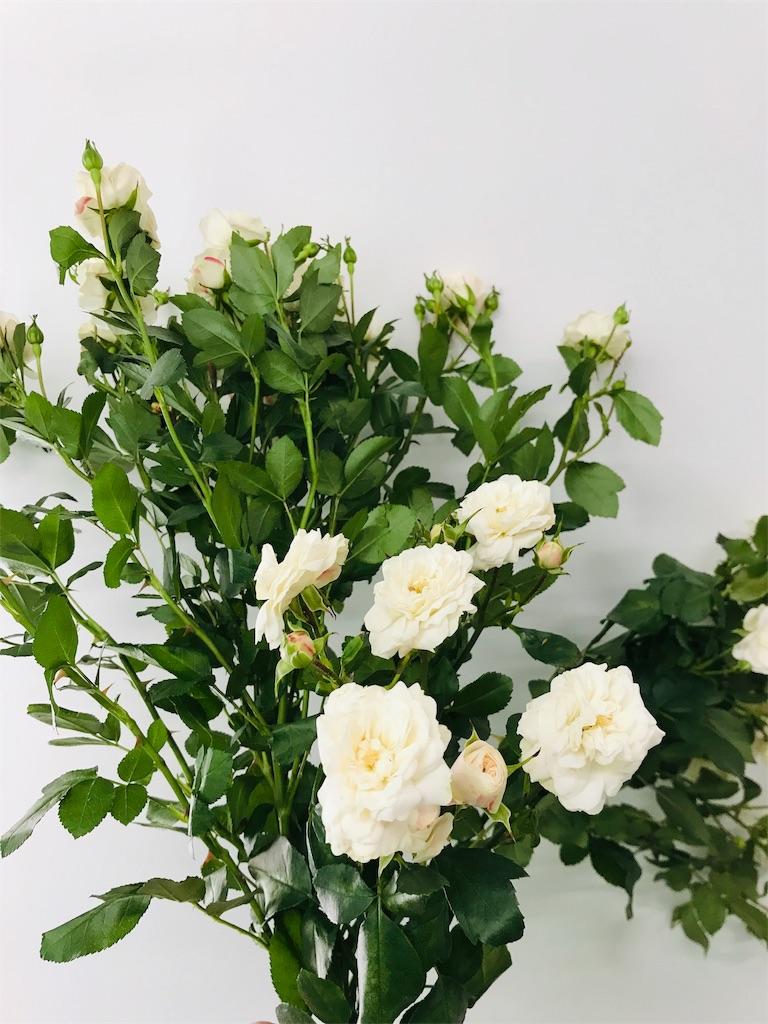 f:id:asunaro-flower:20190521215129j:image