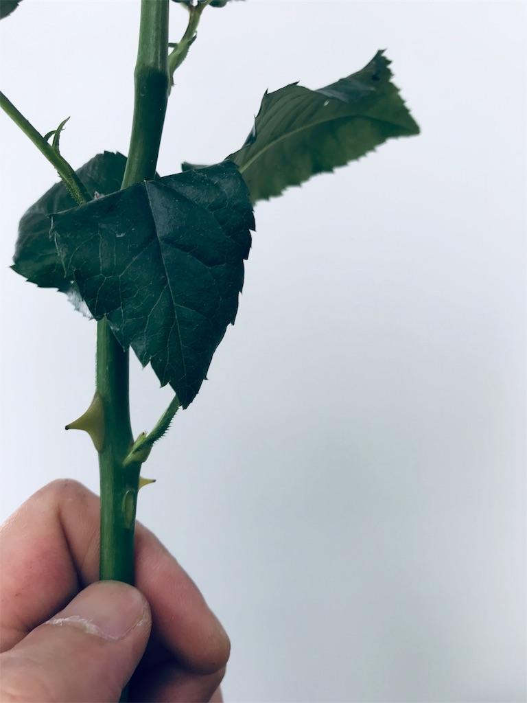 f:id:asunaro-flower:20190521222123j:image