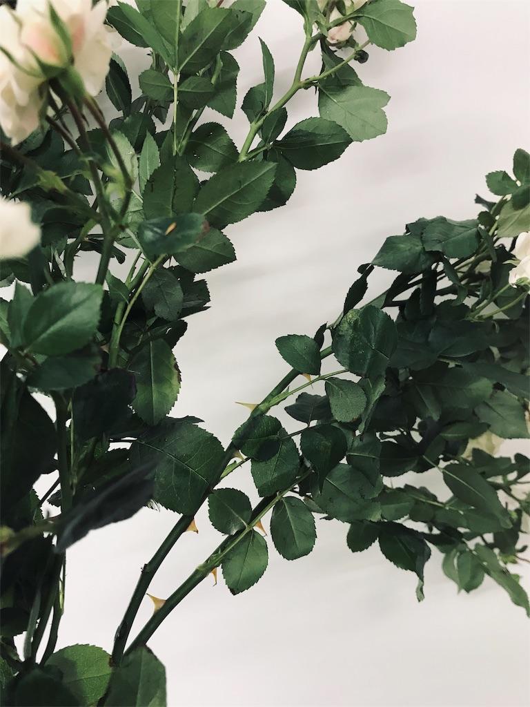 f:id:asunaro-flower:20190521230036j:image