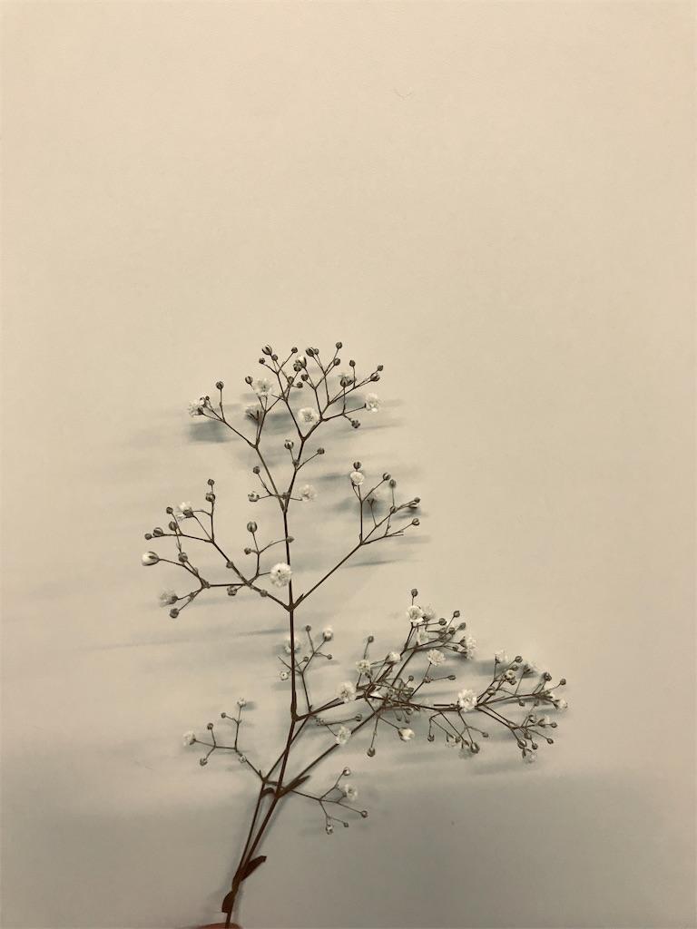 f:id:asunaro-flower:20190530225324j:image