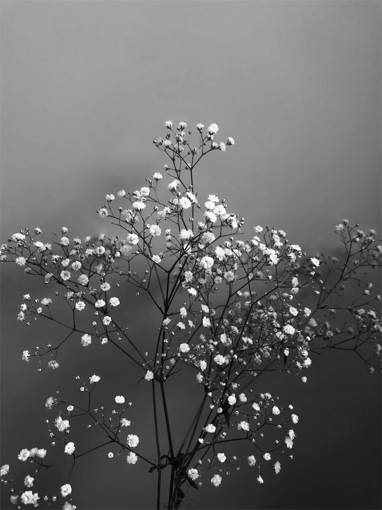 f:id:asunaro-flower:20190530225428j:image