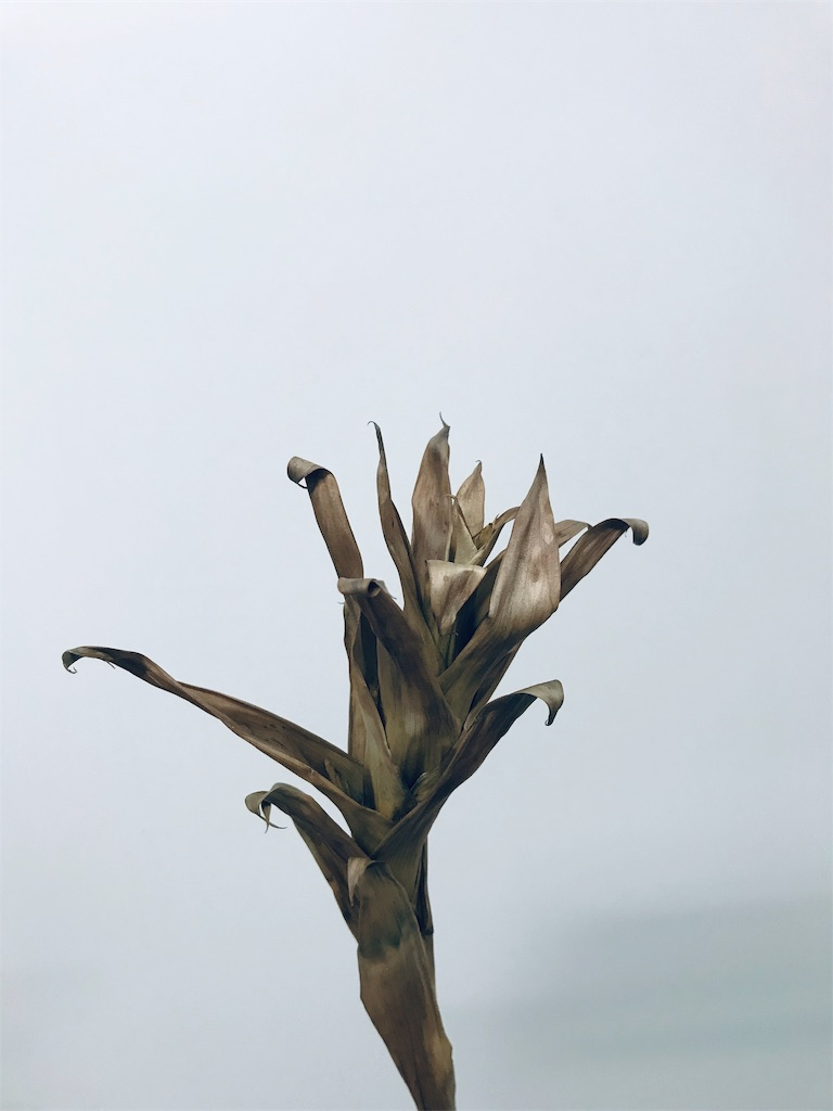 f:id:asunaro-flower:20190606235509j:image