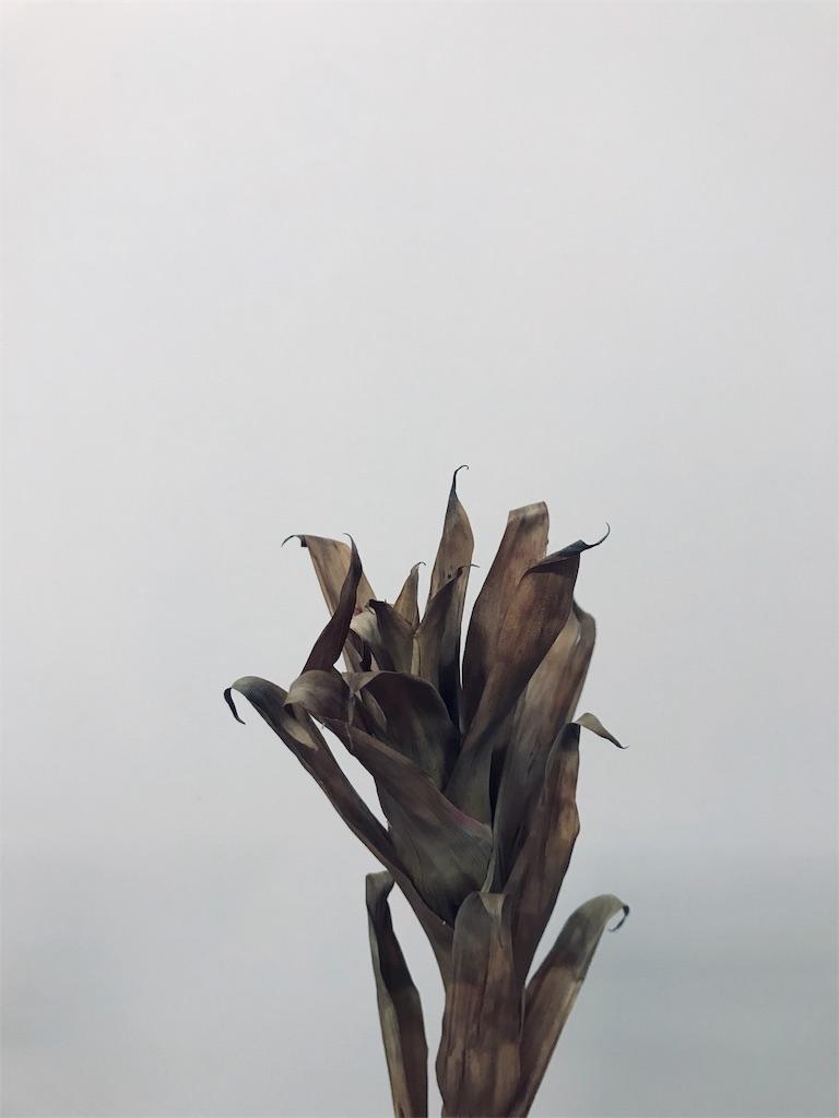 f:id:asunaro-flower:20190606235544j:image