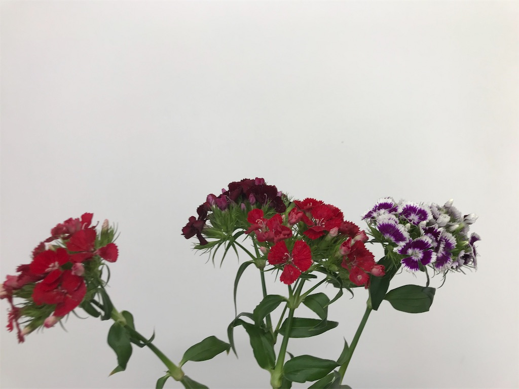 f:id:asunaro-flower:20190611164051j:image