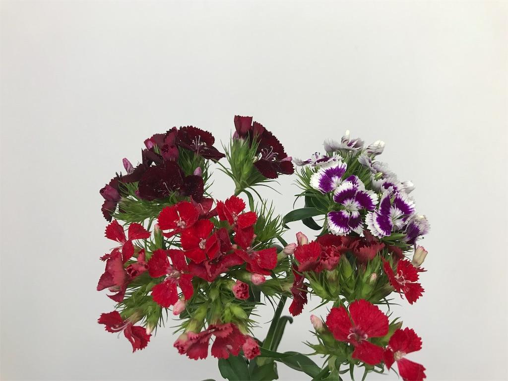 f:id:asunaro-flower:20190611164946j:image