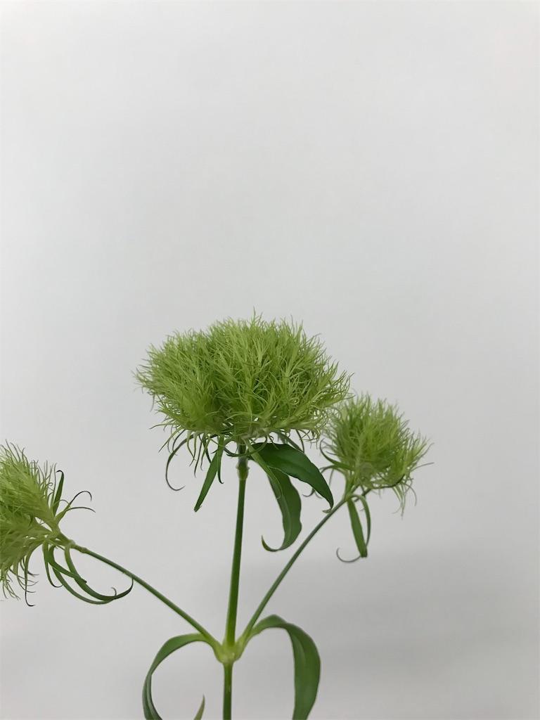 f:id:asunaro-flower:20190611170304j:image