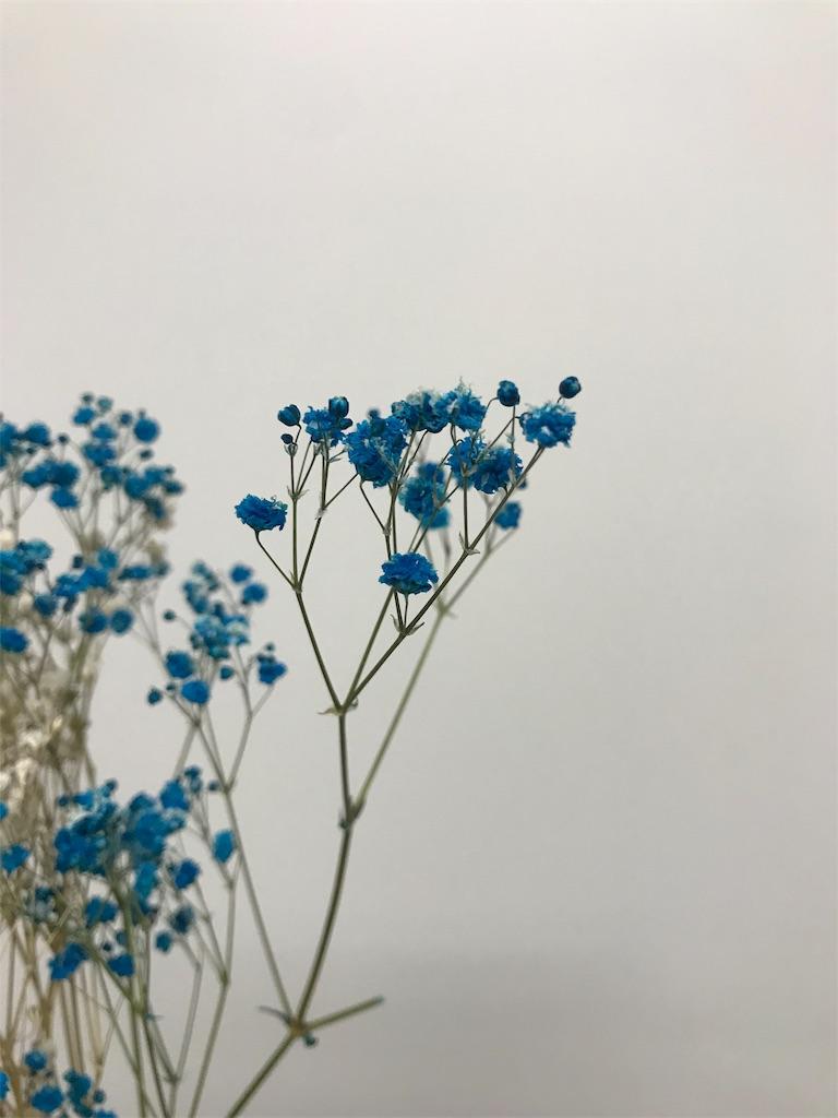 f:id:asunaro-flower:20190615190359j:image