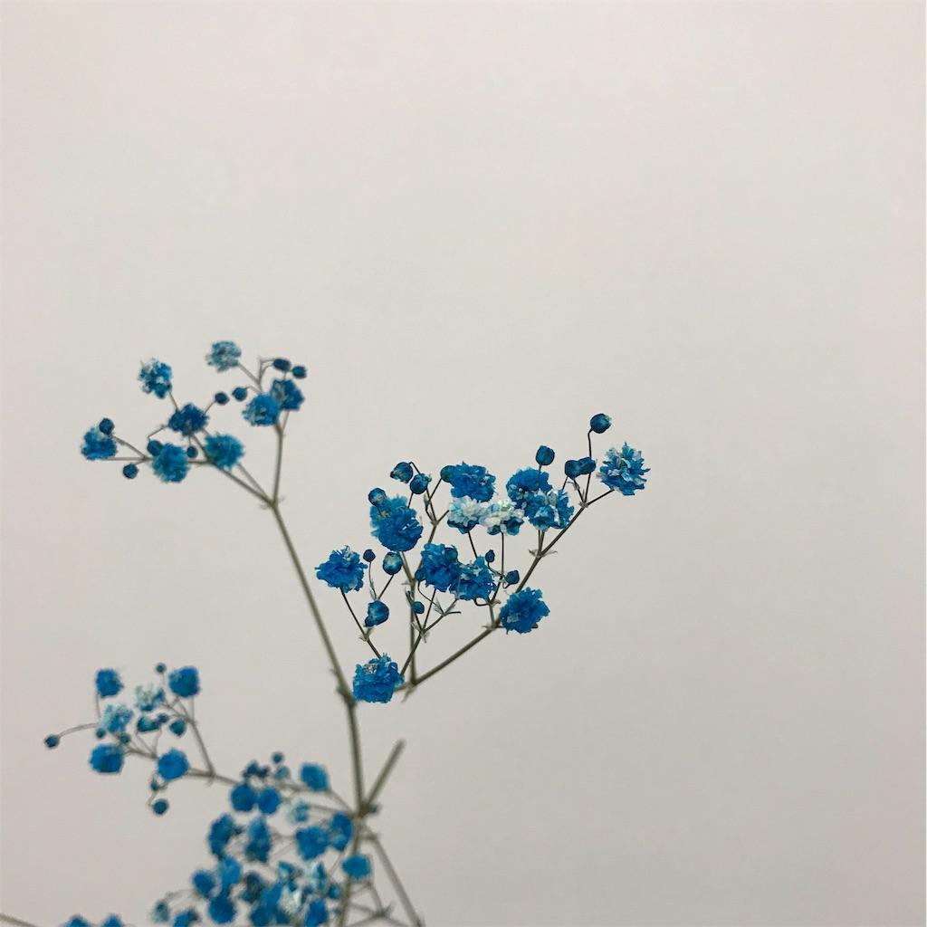 f:id:asunaro-flower:20190615190554j:image