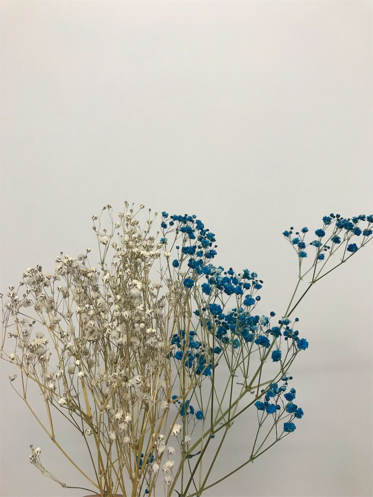 f:id:asunaro-flower:20190615190719j:image