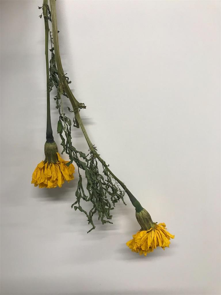f:id:asunaro-flower:20190619225716j:image