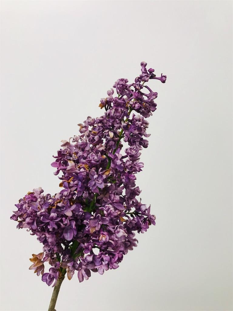 f:id:asunaro-flower:20190628235056j:image