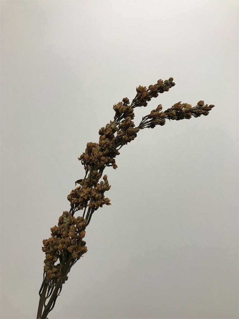 f:id:asunaro-flower:20190629004757j:image