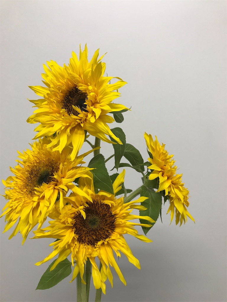 f:id:asunaro-flower:20190703015312j:image