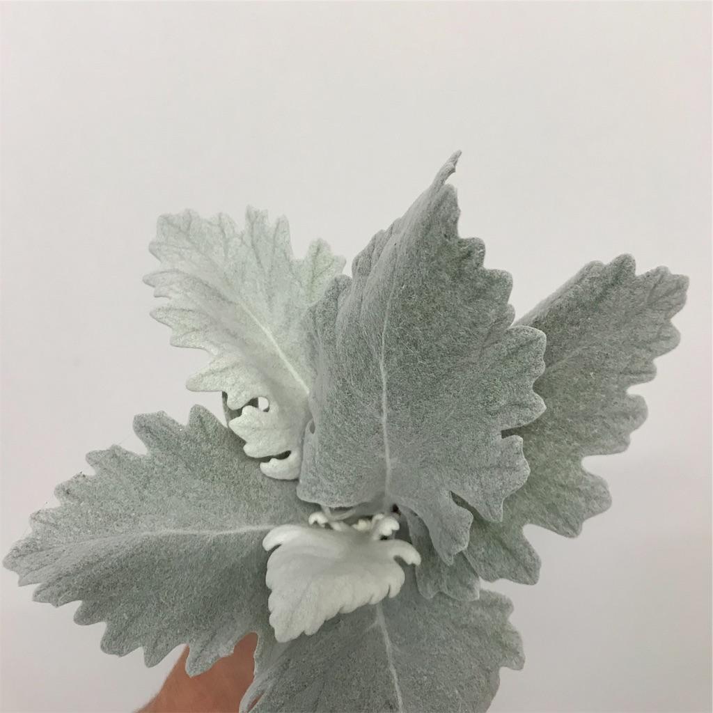 f:id:asunaro-flower:20190708000012j:image