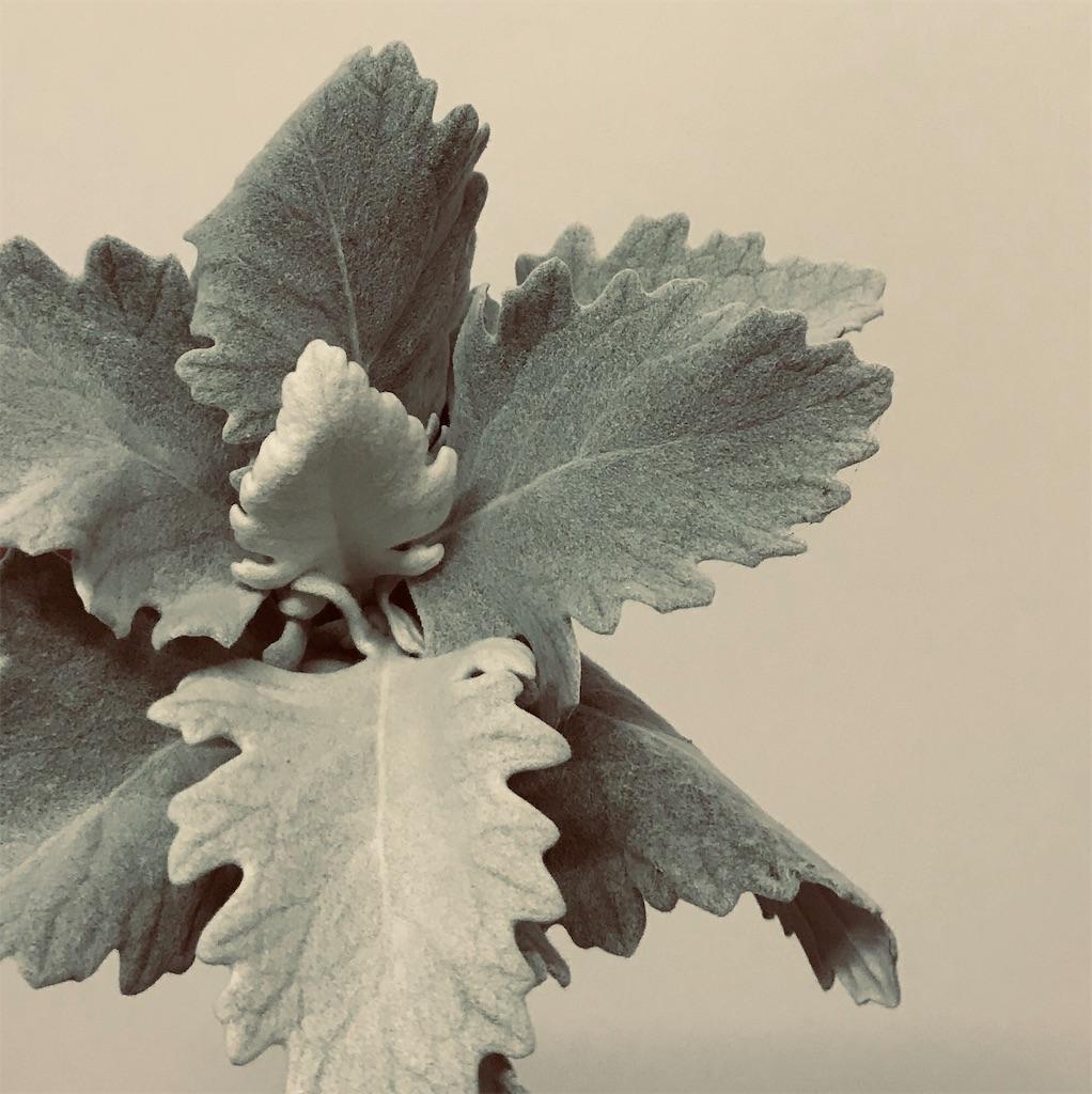 f:id:asunaro-flower:20190708002713j:image