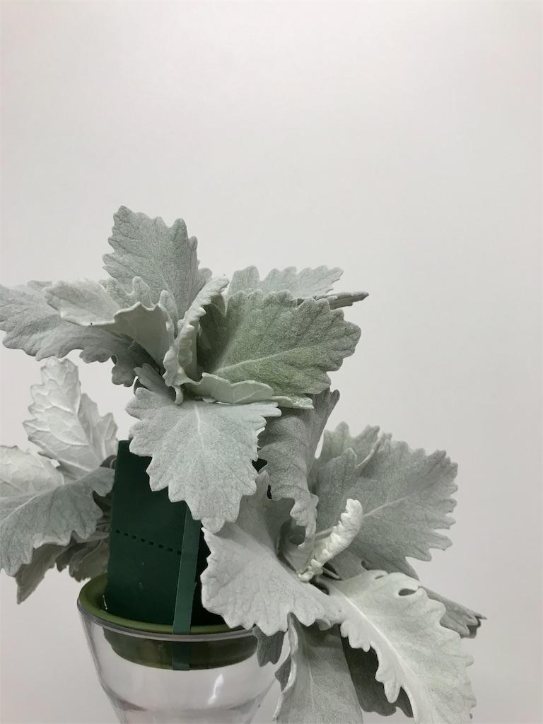 f:id:asunaro-flower:20190708003236j:image