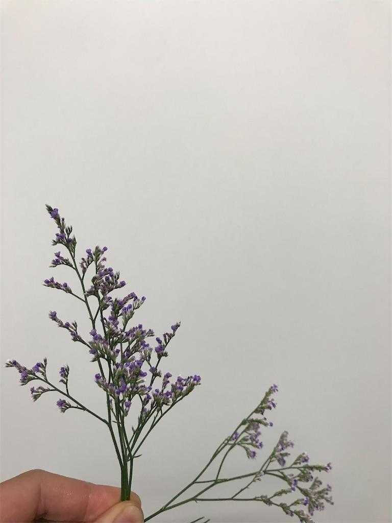 f:id:asunaro-flower:20190708011103j:image