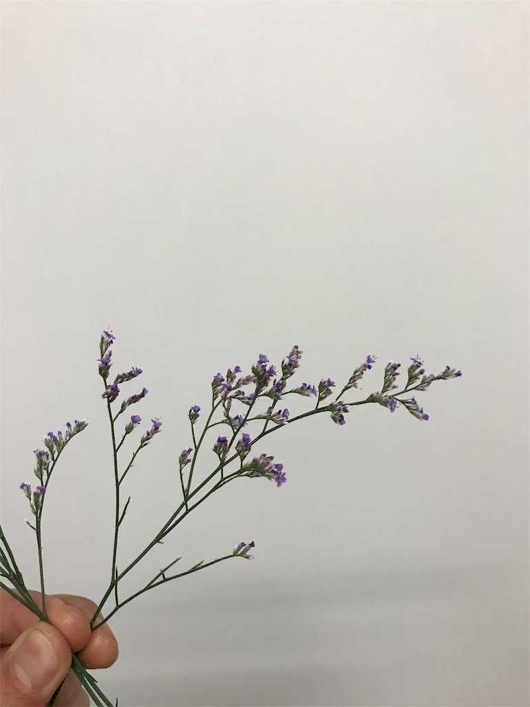 f:id:asunaro-flower:20190708011112j:image