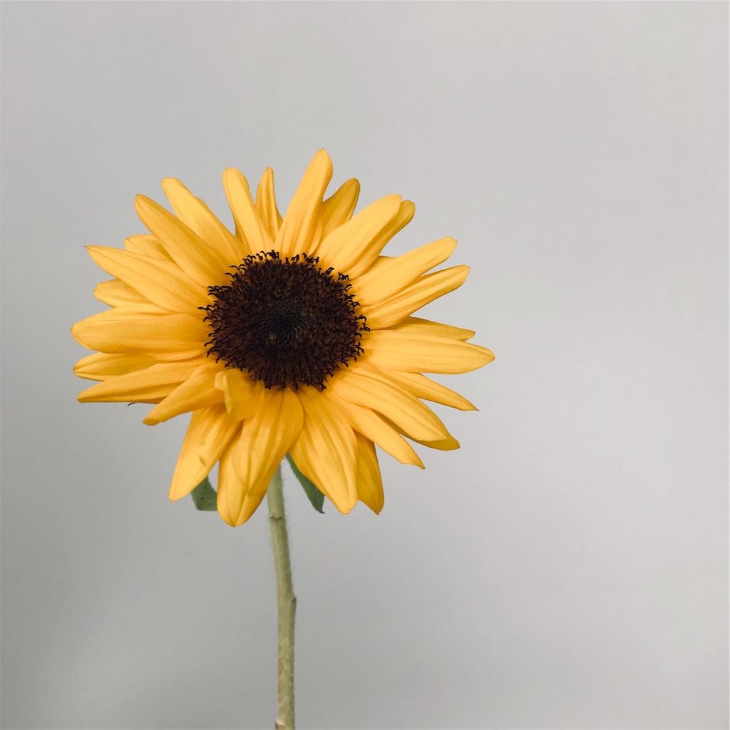 f:id:asunaro-flower:20190717140206j:image
