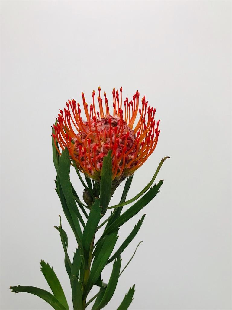 f:id:asunaro-flower:20190727182756j:image