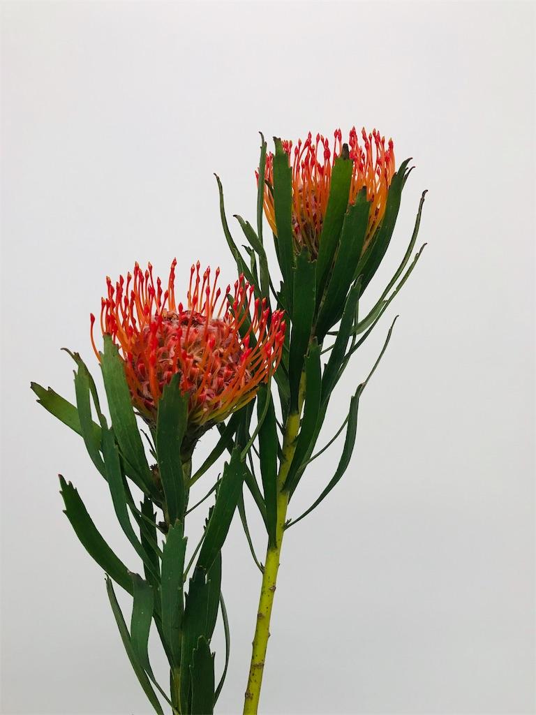f:id:asunaro-flower:20190727224056j:image
